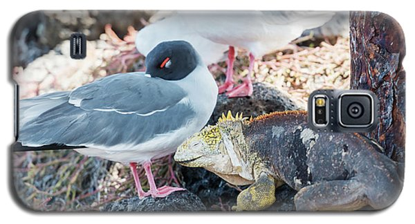 Swallow Tailed Gull And Iguana On  Galapagos Islands Galaxy S5 Case by Marek Poplawski