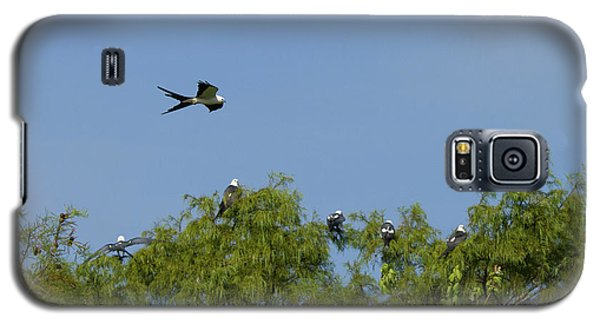 Swallow-tailed Kite Flyover Galaxy S5 Case