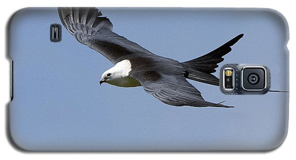 Swallow-tailed Kite Galaxy S5 Case