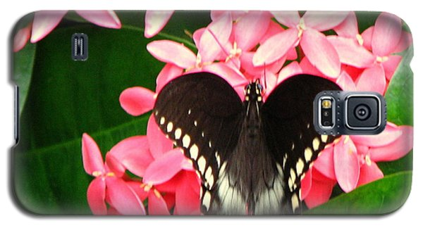 Swallow-wing Butterfly Galaxy S5 Case