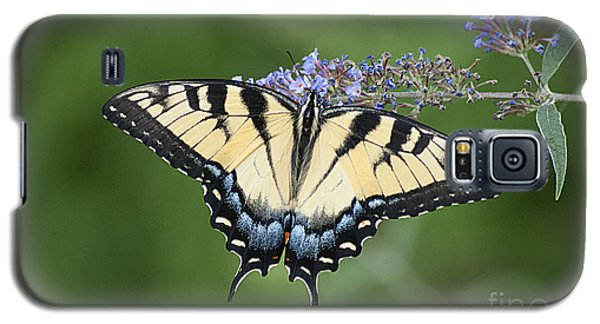 Swallowtail 20120723_24a Galaxy S5 Case