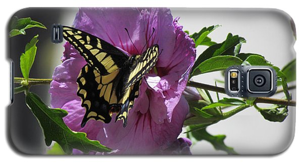 Swallowtail Butterfly Galaxy S5 Case by Bonnie Muir