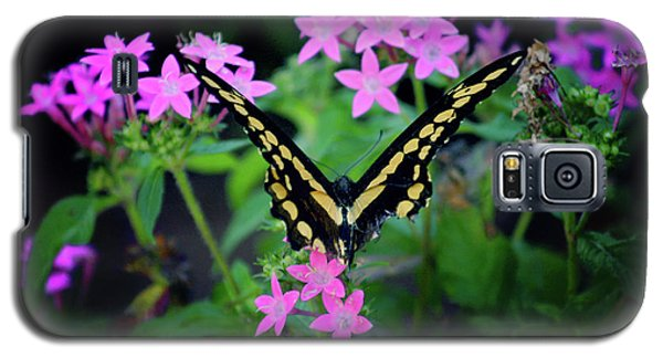 Swallowtail Butterfly Rests On Pink Flowers Galaxy S5 Case by Toni Hopper