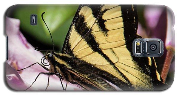 Swallowtail Butterfly Galaxy S5 Case by Marilyn Wilson