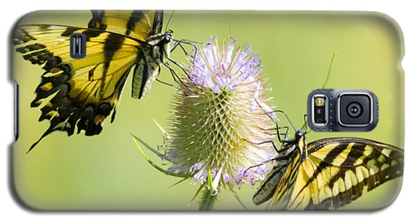 Swallowtails On Thistle  Galaxy S5 Case