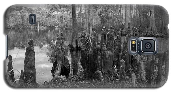 Swamp Stump Galaxy S5 Case