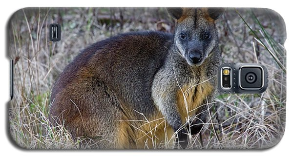 Galaxy S5 Case featuring the photograph Swamp Wallaby  by Miroslava Jurcik