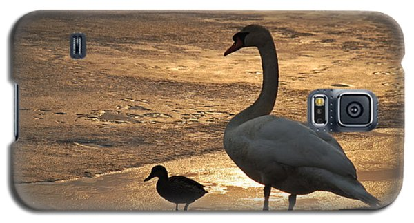 Galaxy S5 Case featuring the photograph Swan And Baby At Sunset by Richard Bryce and Family