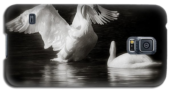 Swan Display Galaxy S5 Case