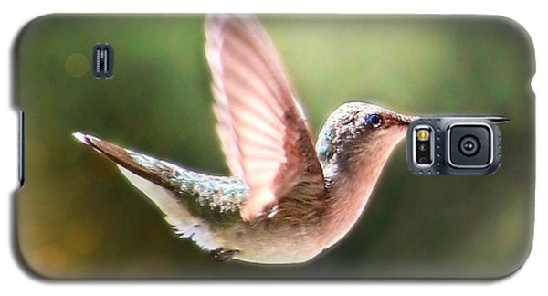 Swan Dive Hummingbird Galaxy S5 Case