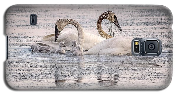 Swan Family Galaxy S5 Case by Kelly Marquardt