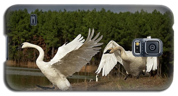 Swan Fight Galaxy S5 Case