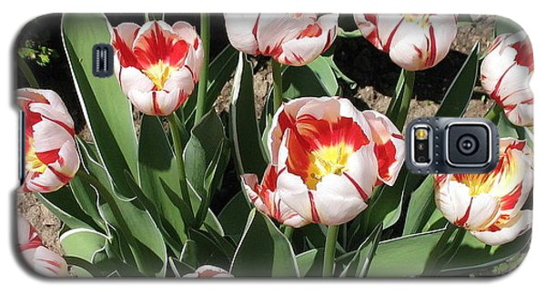 Galaxy S5 Case featuring the photograph Swanhurst Tulips by Jolanta Anna Karolska