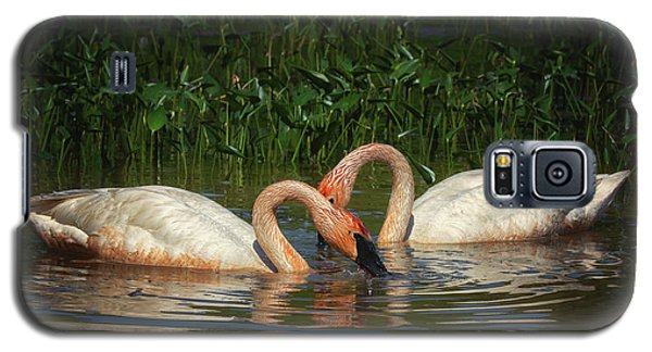 Swans In A Pond  Galaxy S5 Case