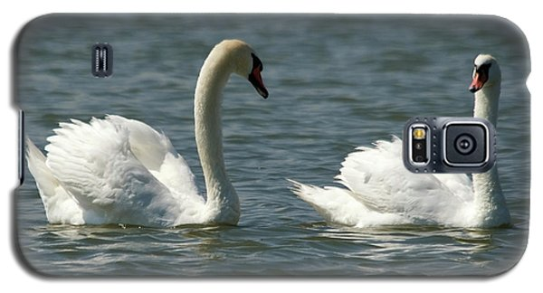 Swans On Lake  Galaxy S5 Case