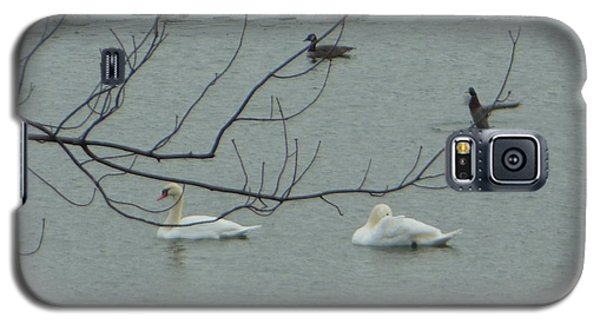 Galaxy S5 Case featuring the photograph Swans With Geese by Rockin Docks Deluxephotos