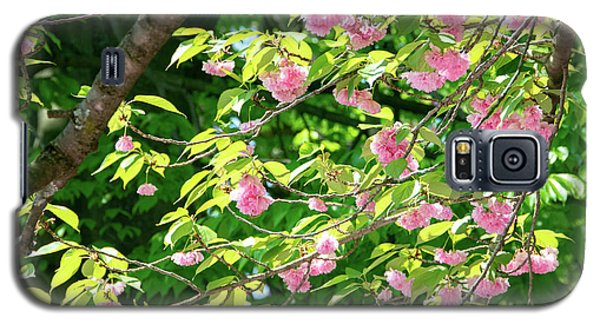 Sweeping Cherry Blossom Branches Galaxy S5 Case