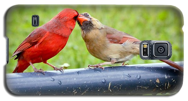 Sweet Cardinal Couple Galaxy S5 Case by Kerri Farley