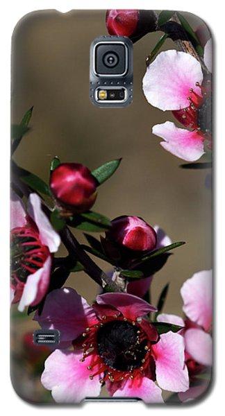 Sweet Cherry Galaxy S5 Case