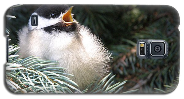 Galaxy S5 Case featuring the photograph Sweet Chickadee by Angie Rea