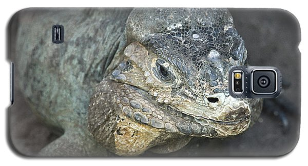 Galaxy S5 Case featuring the photograph Sweet Face Of Rhinoceros Iguana by Miroslava Jurcik