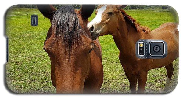 Sweet Horses  Galaxy S5 Case