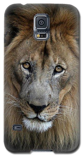 Sweet Male Lion Portrait Galaxy S5 Case