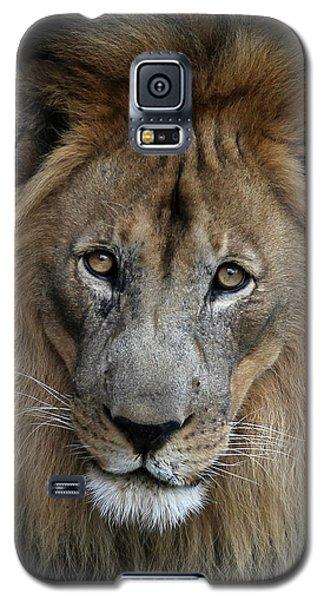 Sweet Male Lion Galaxy S5 Case