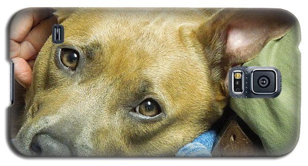 Sweet Pit Bull . Face Of Love Galaxy S5 Case