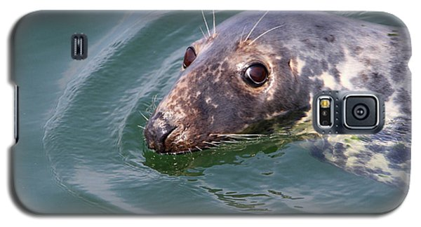 Sweet Seal Galaxy S5 Case