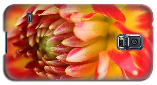 Sweet Spring Galaxy S5 Case