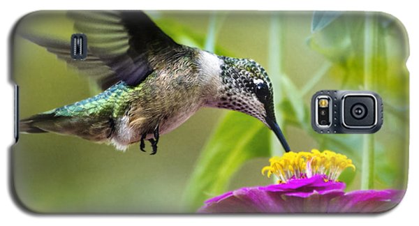 Sweet Success Hummingbird Square Galaxy S5 Case by Christina Rollo