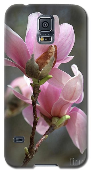 Saucer Magnolia Galaxy S5 Case - Sweetest Pink Magnolia by Carol Groenen