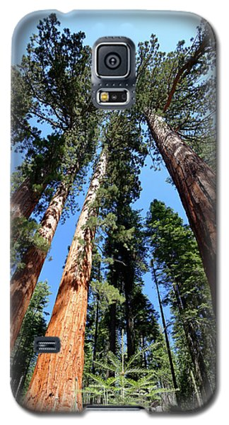 Sylvan Giants 2 Galaxy S5 Case