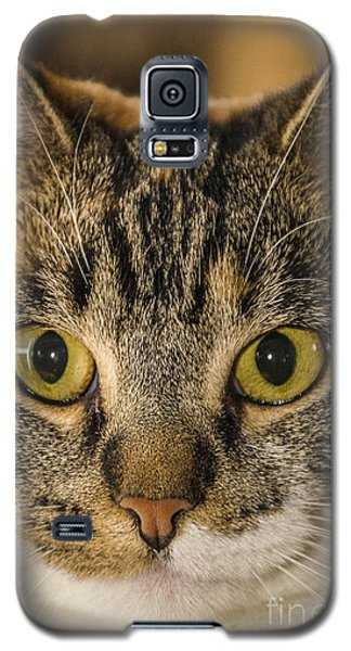 Symmetrical Cat Galaxy S5 Case