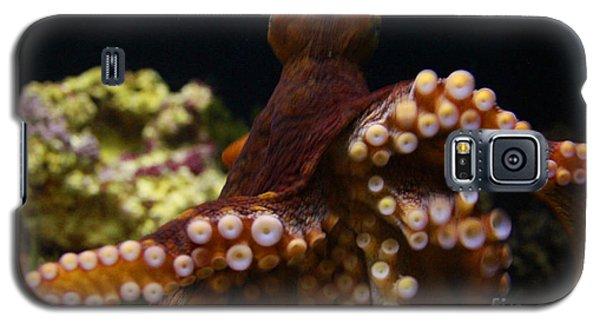 Tako Not Taco Hawaiian Octopus Galaxy S5 Case