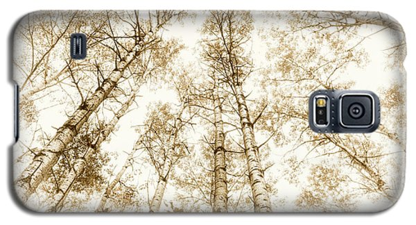 Galaxy S5 Case featuring the photograph Tall Aspens by Elena Elisseeva