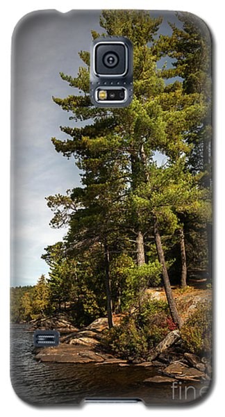 Galaxy S5 Case featuring the photograph Tall Pines On Lake Shore by Elena Elisseeva