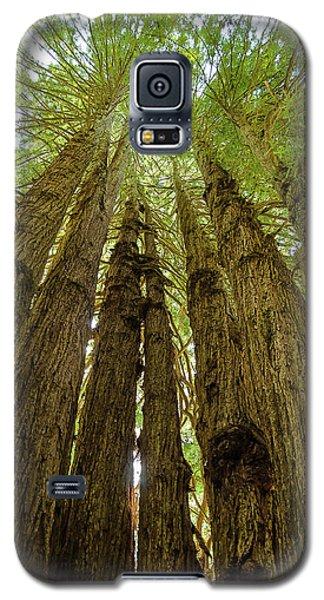 Tall Trees Galaxy S5 Case