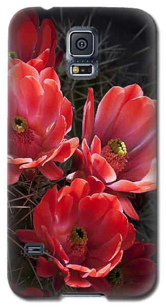 Galaxy S5 Case featuring the photograph Tangerine Cactus Flower by Phyllis Denton