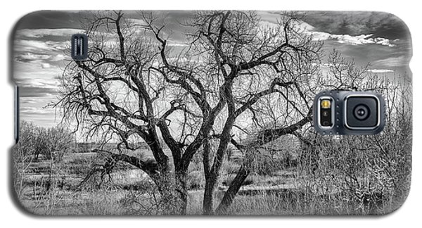 Tangled Old Tree On Platte River Galaxy S5 Case