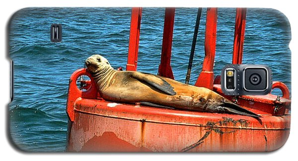 Galaxy S5 Case featuring the photograph Tanning Sea Lion On Buoy by Mariola Bitner