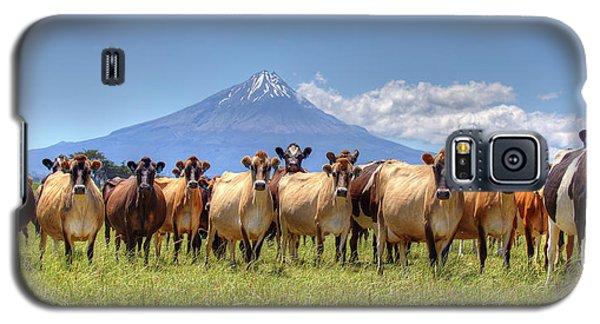 Taranaki Cows Galaxy S5 Case