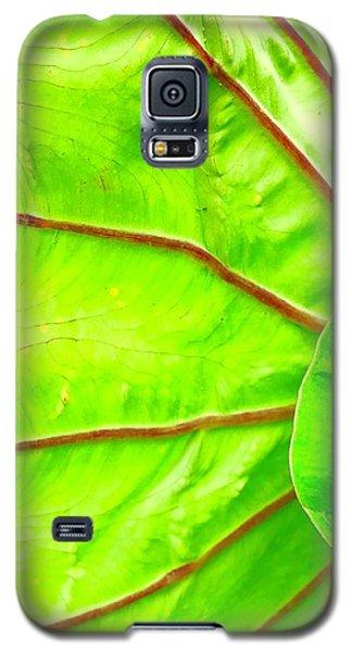 Taro Leaf Close Up In Green Galaxy S5 Case