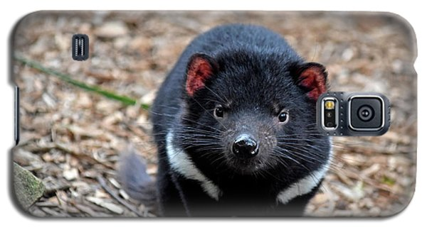 Tasmanian Devil Galaxy S5 Case