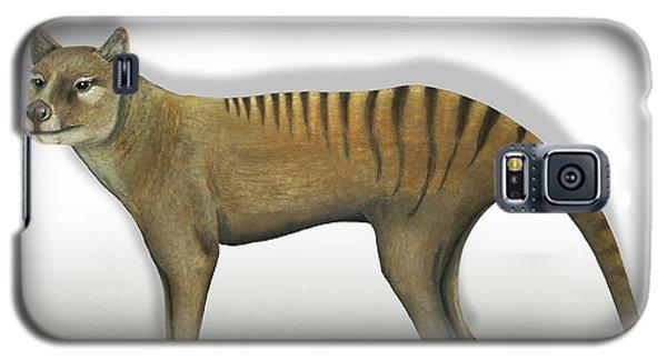 Tasmanian Tiger-thylacinus Cynocephalus-tasmanian Wolf-lobo De Tasmania-tasmanian Loup-beutelwolf    Galaxy S5 Case