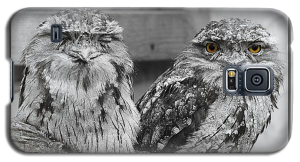 Tawney Frogmouths Galaxy S5 Case