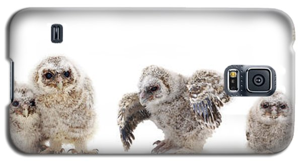 Tawny Owl Family Galaxy S5 Case