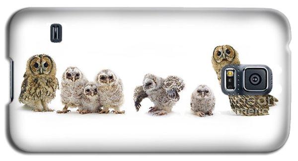 Tawny Owl Family Galaxy S5 Case