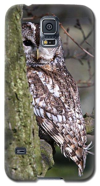 Tawny Owl In A Woodland Galaxy S5 Case